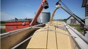 Cơ hội thu mua đậu nành Mỹ giá rẻ nhờ cuộc chiến thương mại Mỹ - Trung