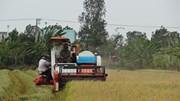 30 năm hạt gạo Việt trở lại thị trường thế giới