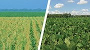 Triển vọng giá thức ăn chăn nuôi heo năm 2019