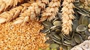 Giá nông sản và kim loại thế giới ngày 21/01/2020