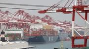 Giá cước vận tải biển ngày 15/6 tăng với tất cả các loại tàu
