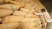 Giá gạo Thái Lan tăng khi vụ thu hoạch kết thúc, gạo Ấn Độ và VN giảm