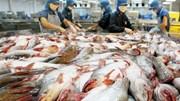 VASEP: Đồng nhân dân tệ mất giá, xuất khẩu thuỷ sản sang Trung Quốc gặp khó