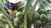 Ra mắt cuốn cẩm nang nâng cao giá trị sản phẩm dừa Việt Nam