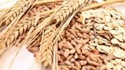 USDA: Tình hình giao hàng nông sản Mỹ tuần tới 20/2/2020