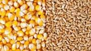 Giá nông sản và kim loại thế giới ngày 27/3/2020