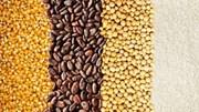 Giá nông sản và kim loại thế giới ngày 20/02/2020