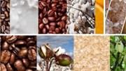Giá nông sản và kim loại thế giới ngày 13/11/2019