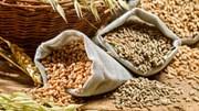 Xuất nhập khẩu ngũ cốc của Trung Quốc tháng 5/2017