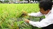 Nâng cao khả năng thích ứng cho nông dân khi hội nhập