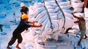 Giá gạo toàn cầu có thể tăng 10-20% trong những tháng tới