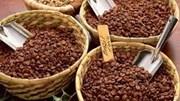 Giá cà phê giảm mạnh do USD tăng