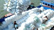 Giá lúa gạo trong nước và xuất khẩu tuần từ 28/9 đến 2/10