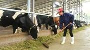 Sản xuất sữa mới đáp ứng 40% nhu cầu trong nước