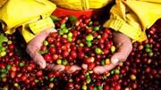 Tuần 5/10-9/10: Thị trường cà phê biến động mạnh