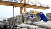 Xuất khẩu xi măng gặp cạnh tranh gay gắt bởi Trung Quốc, Ấn Độ
