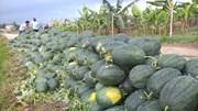 TT rau quả ngày 28/02: Các loại trái cây, rau củ vẫn giảm giá