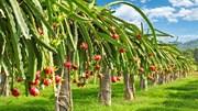 Hướng đi mới cho hàng nông sản Việt Nam tại Ấn Độ