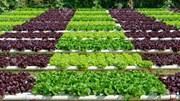 Thủ tướng CP phê duyệt Đề án phát triển nông nghiệp hữu cơ giai đoạn 2020 - 2030