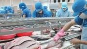 Xuất khẩu cá tra phục hồi trở lại vào quí III?