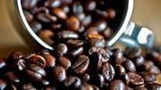 Giá cà phê trong nước ngày 23/11/2017