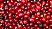 Cà phê châu Á: Indonesia giao dịch tăng trước vụ thu hoạch nhỏ, Việt Nam trầm lắng