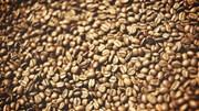 TT cà phê ngày 15/01: Giá đi ngang tại các vùng nguyên liệu trọng điểm Tây Nguyên