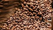 TT cà phê ngày 28/01: Giá giữ vững mức 31.100 – 31.500 đồng/kg
