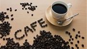 TT cà phê ngày 15/11: Giá tiếp tục leo thang lên 33.800 – 34.200 đồng/kg