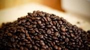 Giá cà phê trong nước ngày 20/7/2017