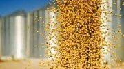 Giá khô đậu tương kỳ hạn tại CBOT ngày 01/9/2016