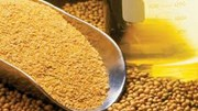 Giá khô đậu tương kỳ hạn tại CBOT ngày 25/9/2017