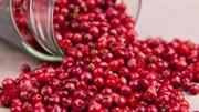 TT hạt tiêu tuần 45: Giá xuống dốc thêm 500 đồng/kg
