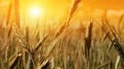 Giá nông sản và kim loại thế giới ngày 24/02/2021