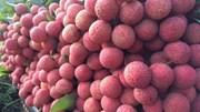 TT nông sản ngày 26/5: Nhiều loại rau củ trong nước và trái cây nhập khẩu có giá tốt