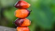 Ấn Độ trì hoãn đề xuất cắt giảm thuế nhập khẩu dầu thực vật