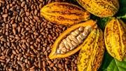 Giá nông sản thế giới chi tiết hôm nay 28/10/2021