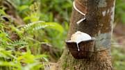 Dự báo Ấn Độ tăng nhập khẩu cao su để đáp ứng nhu cầu trong nước