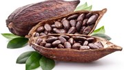 Số liệu nghiền bột cacao của châu Á tăng do vụ thu hoạch của châu Phi ảm đảm