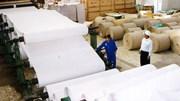 Sản xuất giấy nội đang bị cạnh tranh gay gắt vì giấy ngoại