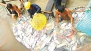 Bộ Nông nghiệp quyết giữ tỷ lệ mạ băng cá tra 10%