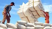 Hiệp hội lương thực: Xuất khẩu gạo sẽ khởi sắc từ quý IV