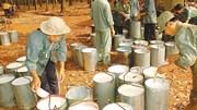 Giá cao su Việt Nam lao đầu giảm 30 USD/tấn