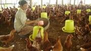 Thứ trưởng Bộ Nông nghiệp: Ngành chăn nuôi sẽ thua trên sân nhà nếu không thay đổi