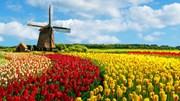 Hà Lan – đối tác quan trọng hàng đầu của Việt Nam tại châu Âu
