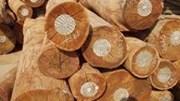 Kim ngạch xuất khẩu gỗ và sản phẩm tăng tháng thứ hai liên tiếp