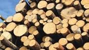 Kim ngạch nhập khẩu gỗ và sản phẩm giảm tháng thứ hai liên tiếp