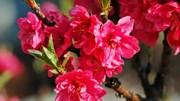 TT hoa cây cảnh: Giá một số loại hoa truyền thống có thể tăng 20%