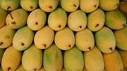 Xoài - một trong 6 loại quả tươi được cấp phép sang thị trường Mỹ