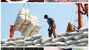 Đồng bằng sông Cửu Long xuất siêu 3,5 tỷ USD